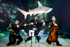 Divers from the Sea Life Aquarium pictured with their world famous sharks in traditional orchestral tails to celebrate the return of BBC Earth's The Blue Planet in Concert to London on January 22nd. Tickets are available from philharmonia.co.uk